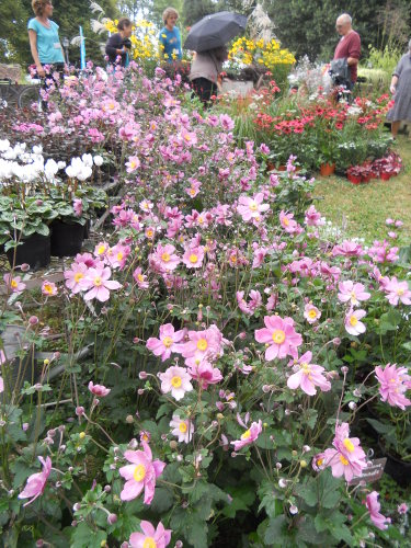 The Flowering Walls Of Lucca From London To Longoio And