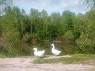 Lago_di_Pieve_Fosciana_1