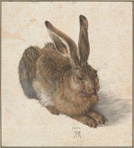 Albrecht_Dürer_-_Hare,_1502_-_Google_Art_Project