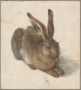Albrecht_Dürer_-_Hare,_1502_-_Google_Art_Project