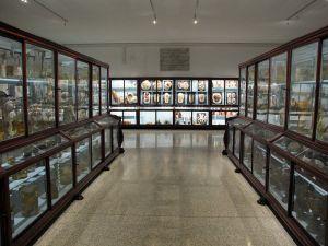 800px-Istituto_di_anatomia_patologica,_museo,_00