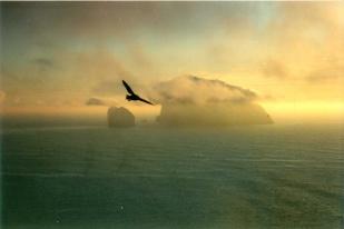 St Kilda 88081
